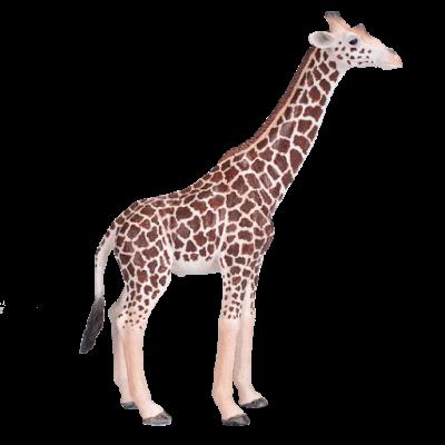 Girafa macho - XL