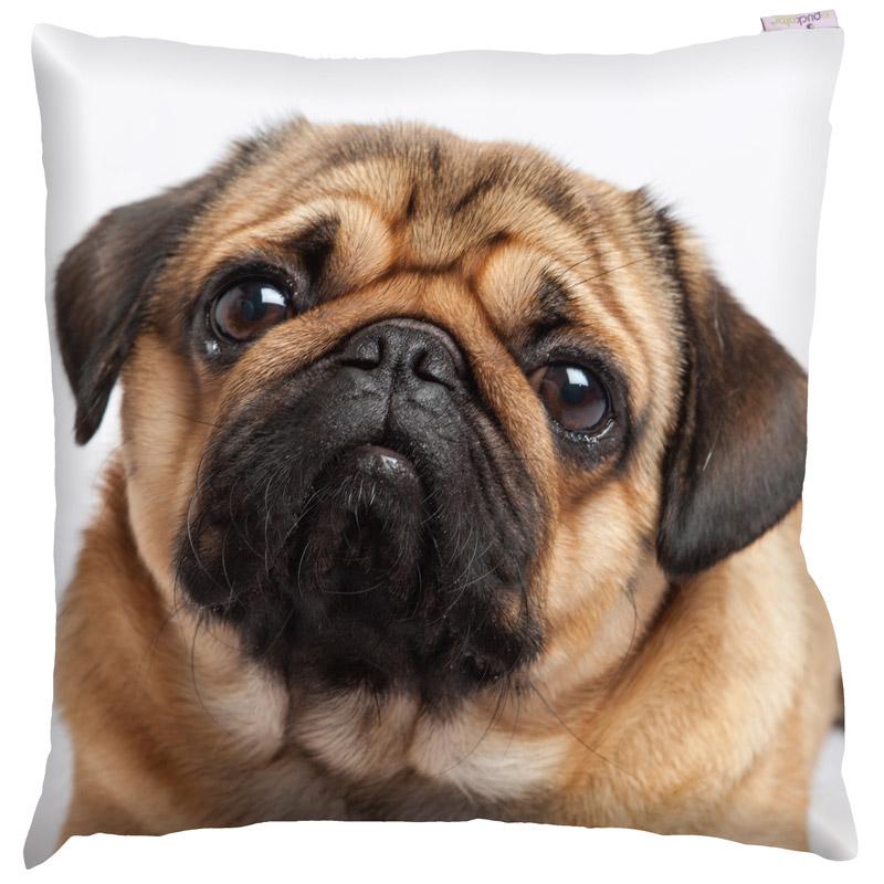 Almofada cabeça de cão Pug Carlino 50 x 50