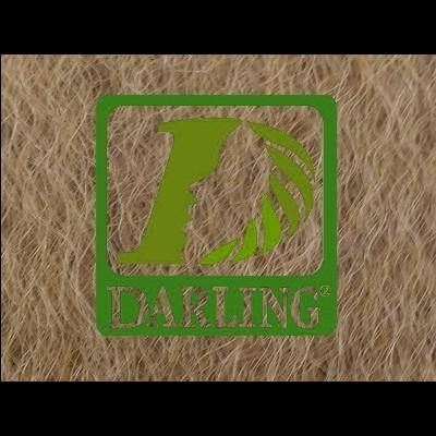 Darling Xpression  Cor-27/ 1m