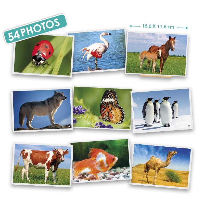 Cartões Os Animais - Akros