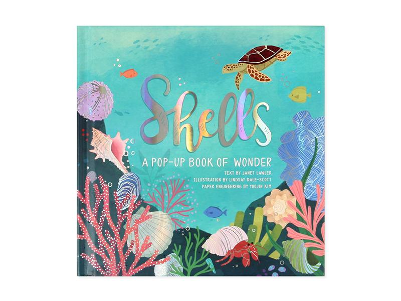 Shells | a Pop-Up Book of Wonder