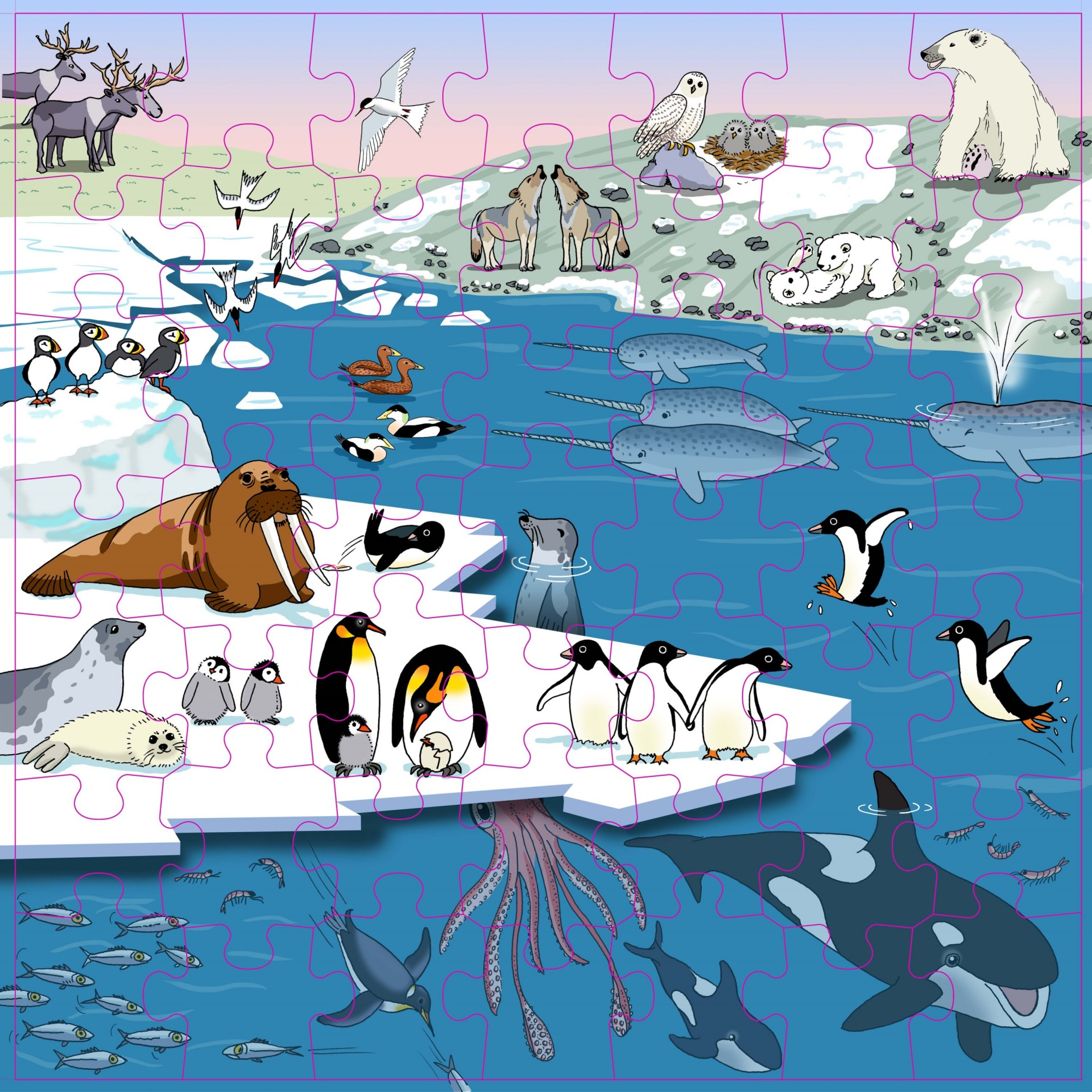 Regiões Polares Puzzle Vocabulário