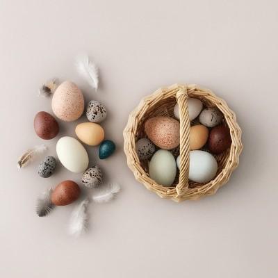 Cesto Ovos de Aves