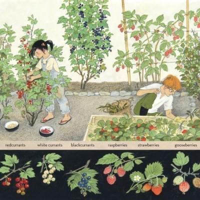 How Does My Fruit Grow - Floris Books
