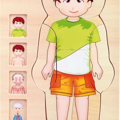 Corpo Humano Masculino Puzzle de Camadas
