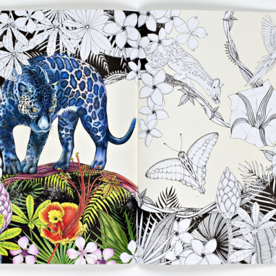Into the Wild | An Exotic Woodland Colouring Book