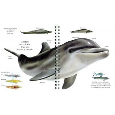 Golfinhos - My First Discoveries