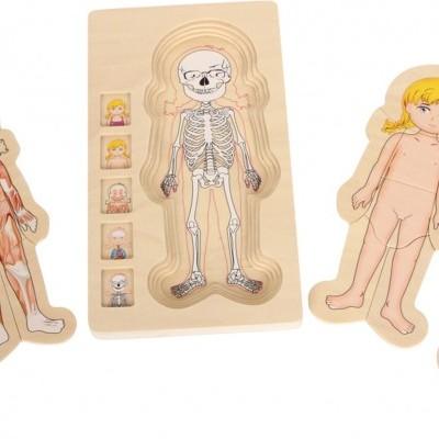 Corpo Humano Feminino Puzzle de Camadas
