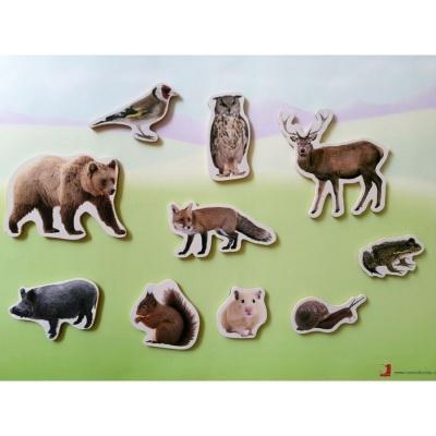Animais da Floresta - Peças Magnéticas