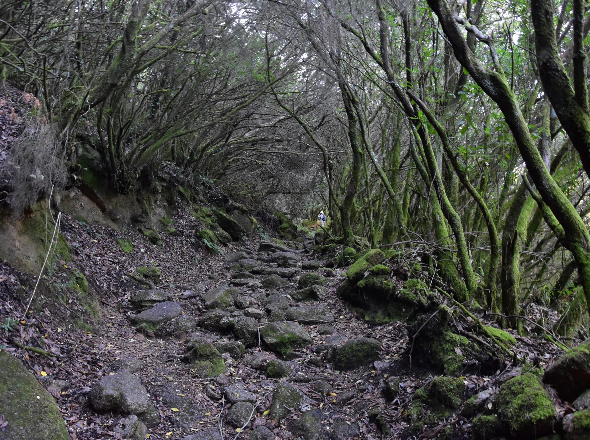 """Sarilhão"" Eagle's Route   Senda del Aguila del Sarilhão"
