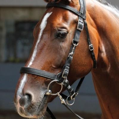Cabeçada 2 em 1 HARRY'S HORSE