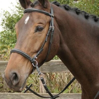 Cabeçada Bitless HARRY'S HORSE