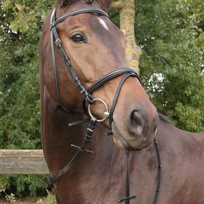 """Cabeçada de Bridão HARRY'S HORSE """"Bronze"""""""