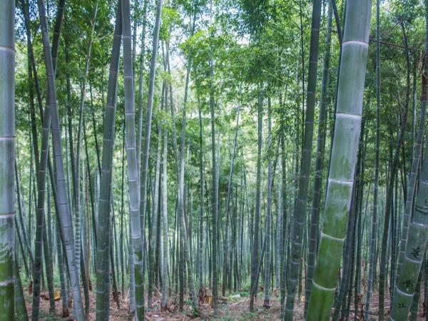 Cotonetes em bambu e algodão