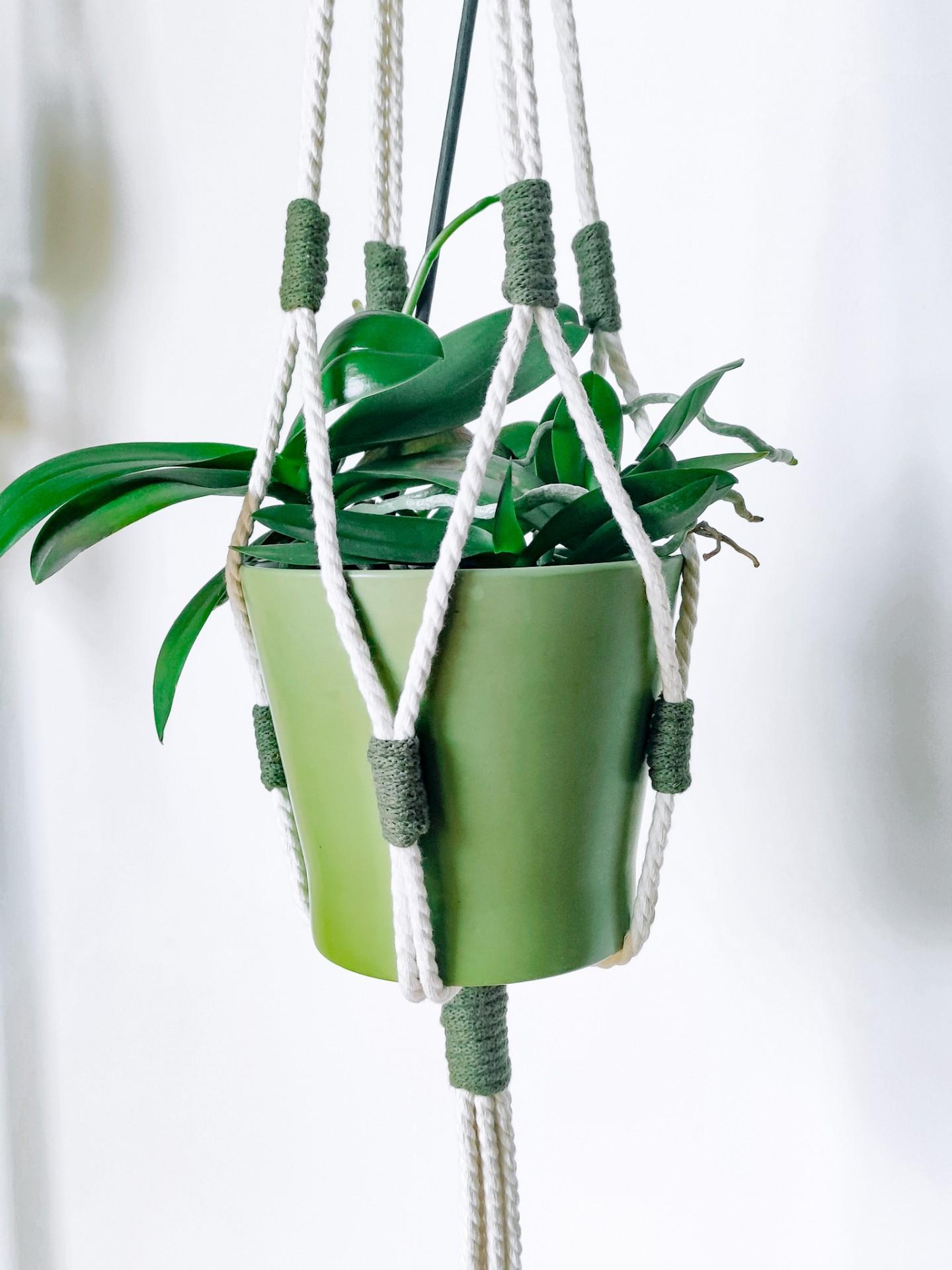 Plant Hanger n. 3