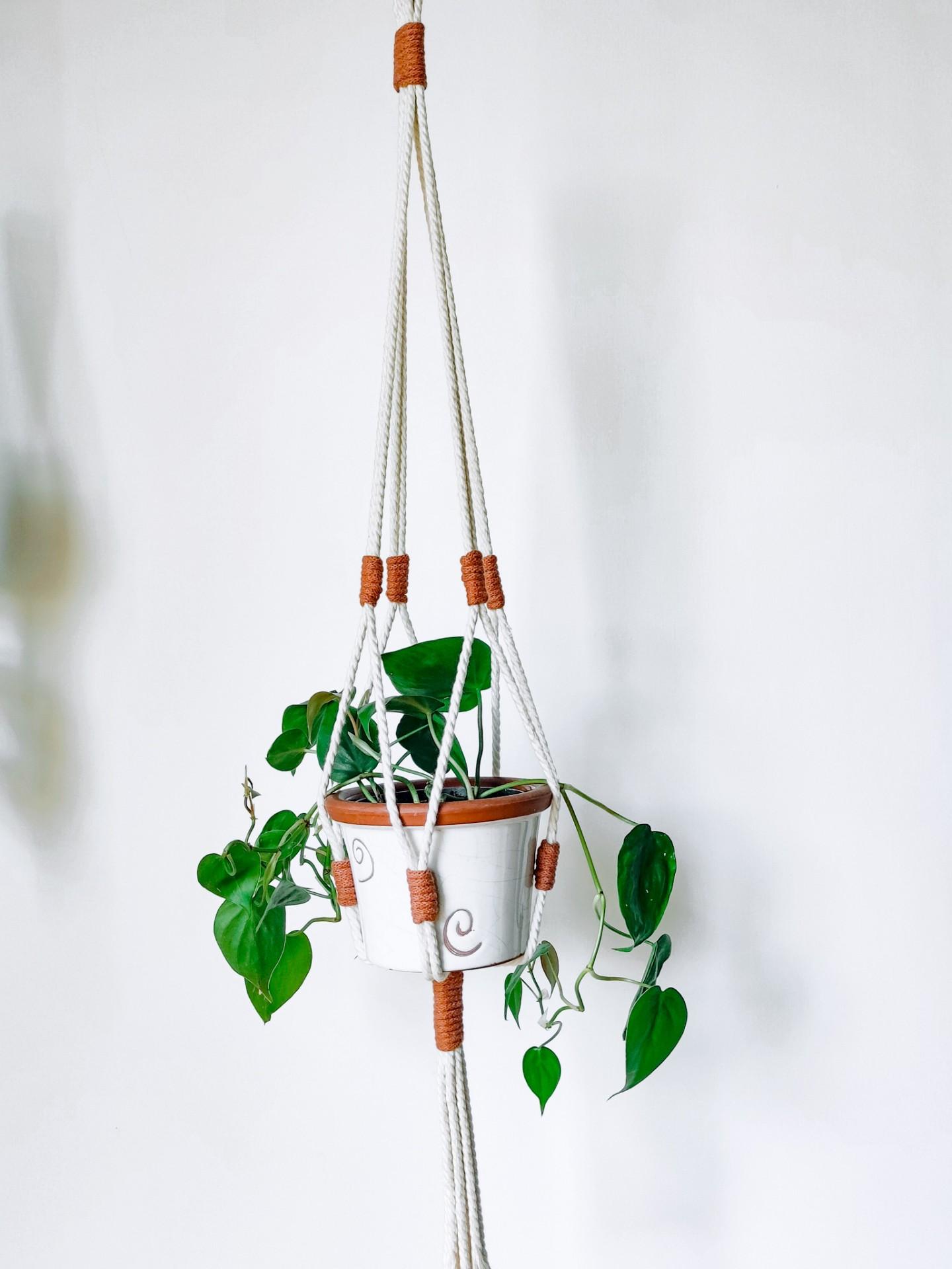 Plant Hanger n. 2