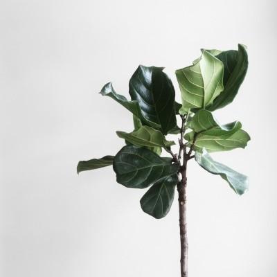 Droplet Plant Kit 🌱