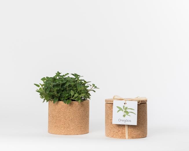 Grow Cork Oregãos