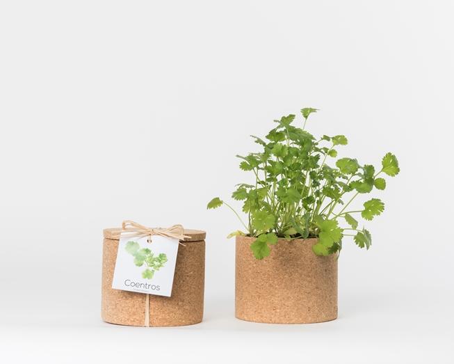 Grow Cork Coentros