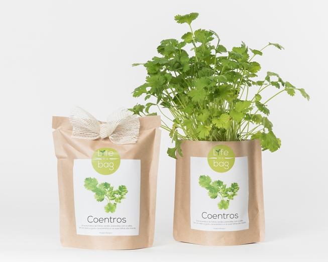 Grow Bag Coentros