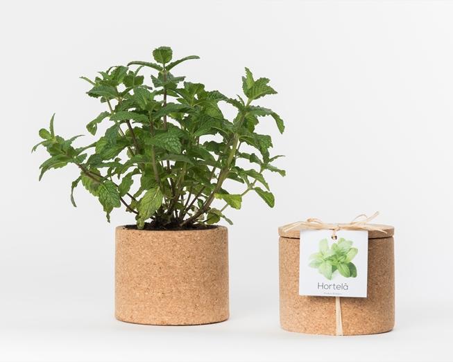 Grow Cork Hortelã