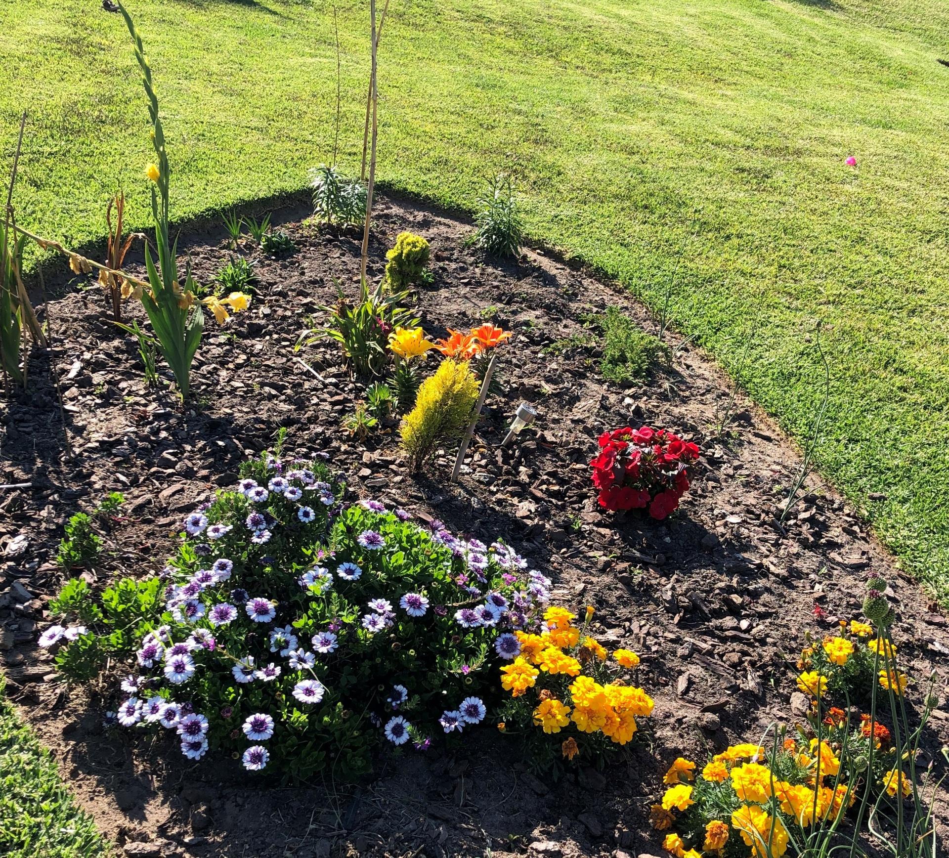 Instalação de Hortas e Jardins