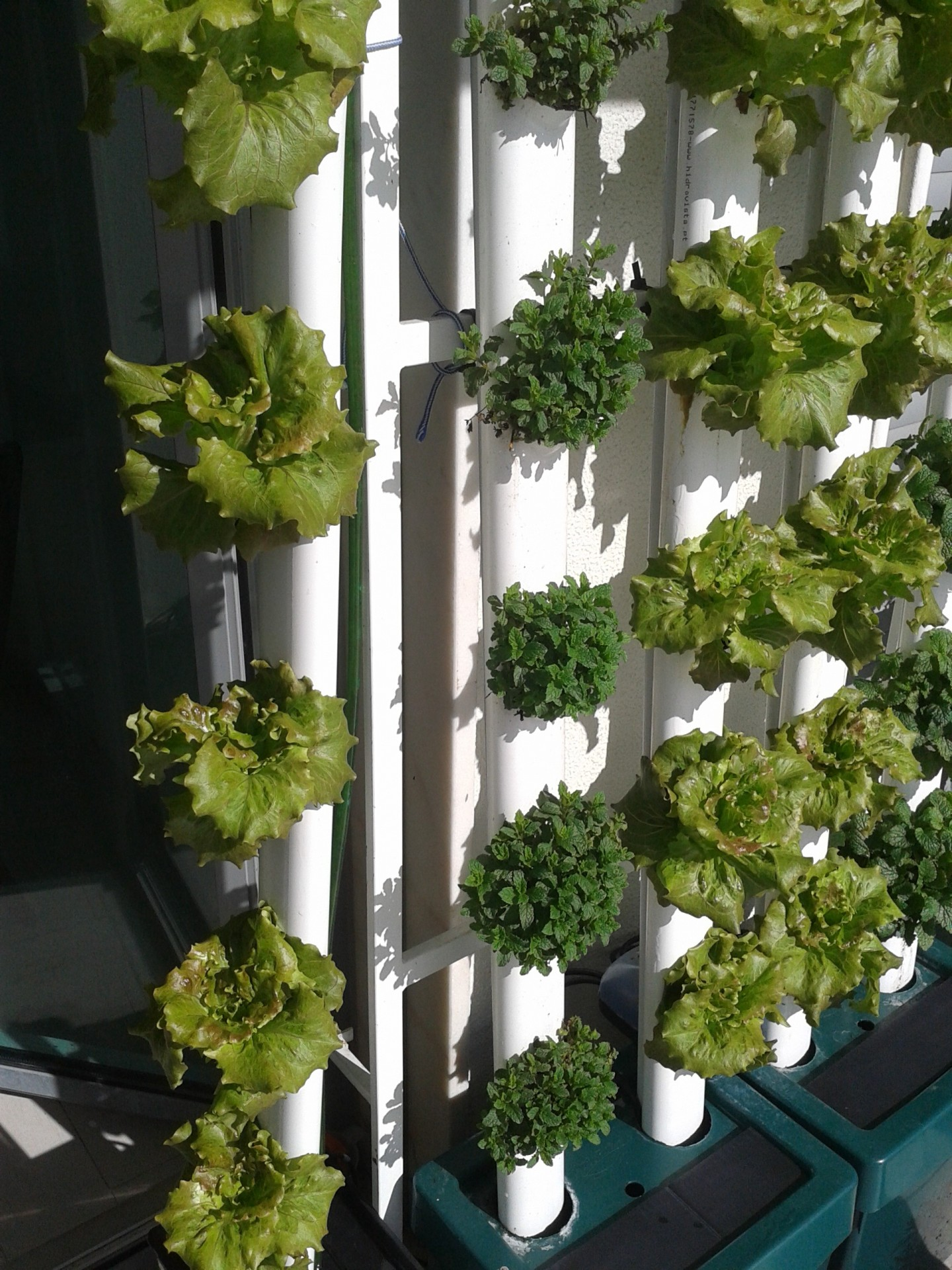 Hidroponia e Agricultura Urbana