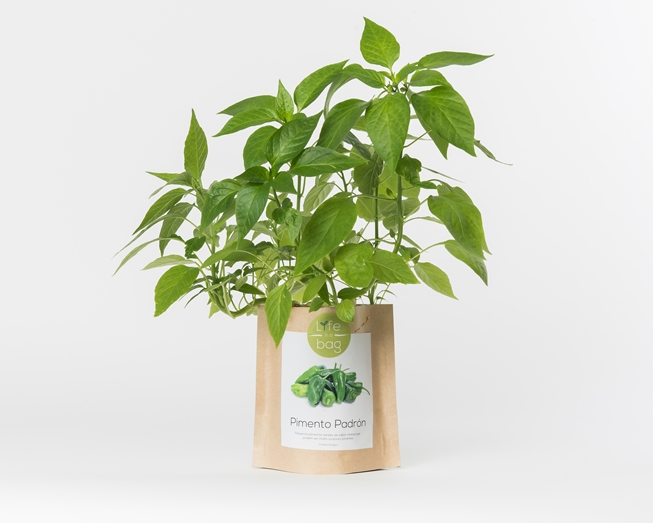 Grow Bag Pimento Padrón