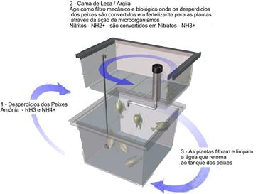 sistema aquapónico, sistema de aquaponia