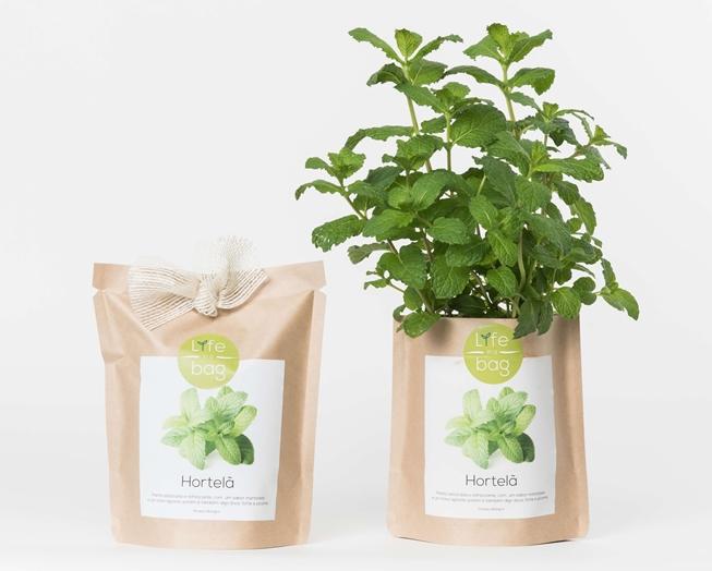 Grow Bag Hortelã