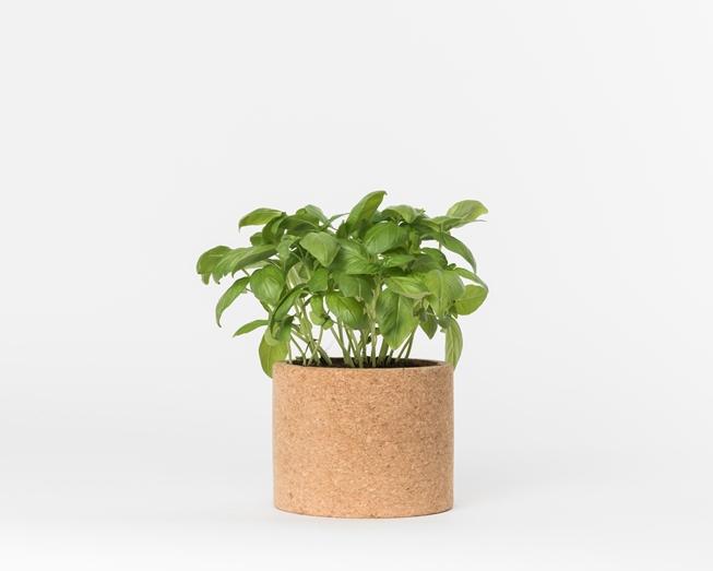 Grow Cork Manjericão