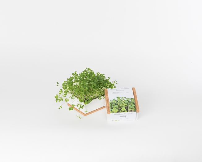 Grow Box Uno