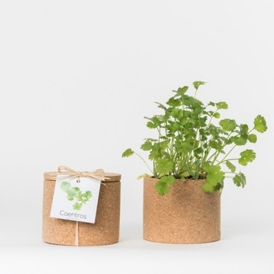 Grow Cork Coentros