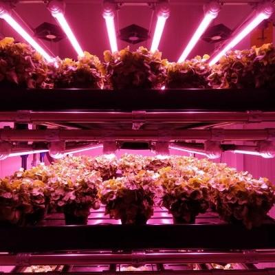 Agricultura Vertical e de Interior