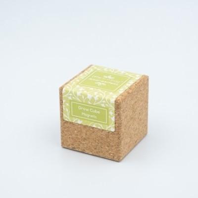 Grow Cube Amor-Perfeito