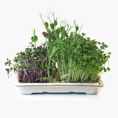 Kit Microgreens SUAVE