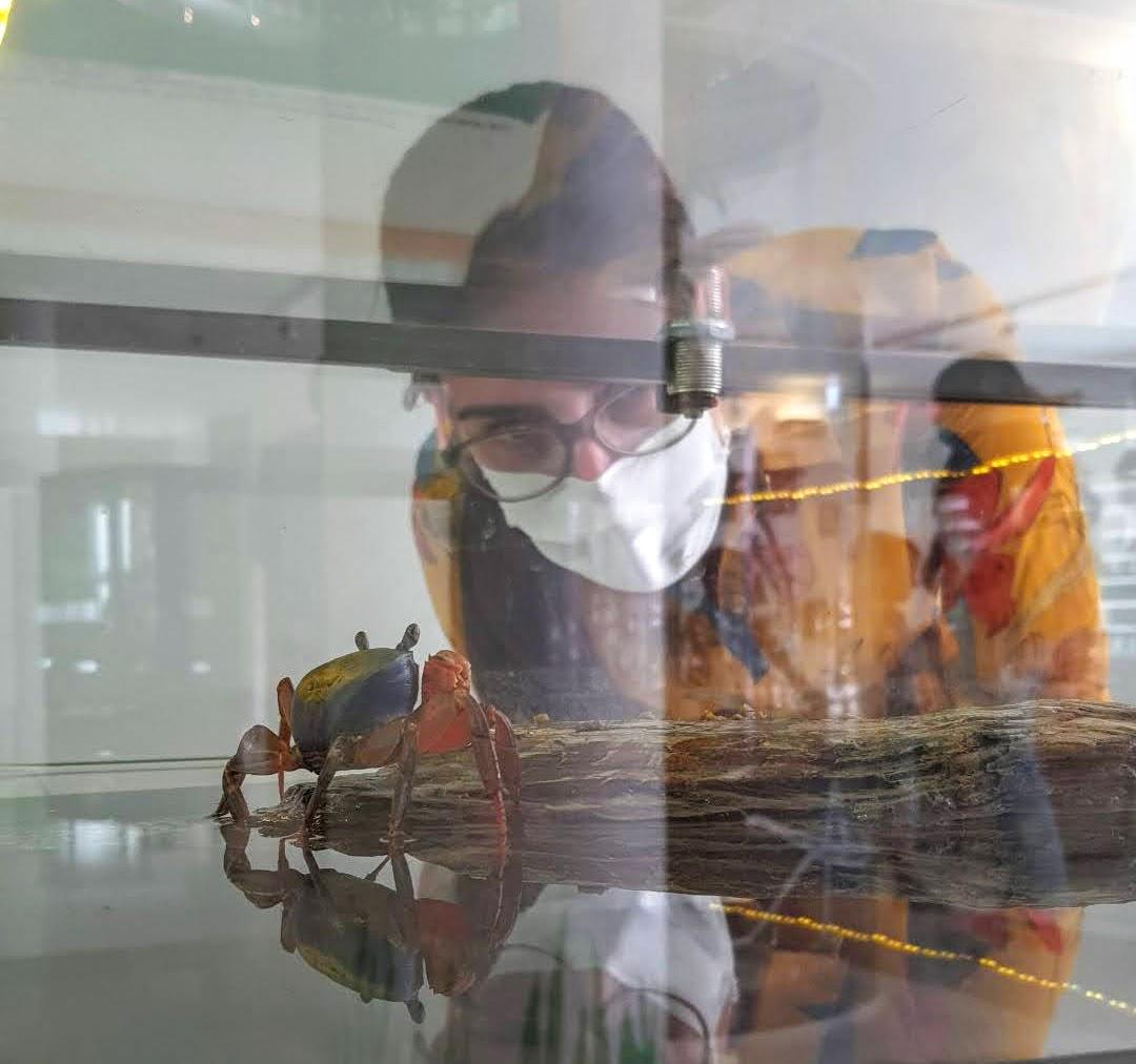 exposição exploratório bichos de pata articulada