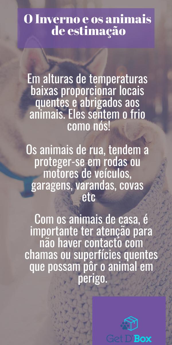 O frio e os animais de estimação