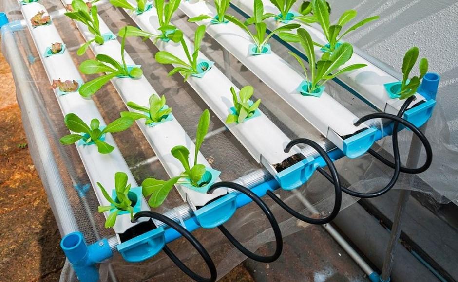 Hidroponía orgánica: ¿cómo hacerlo?