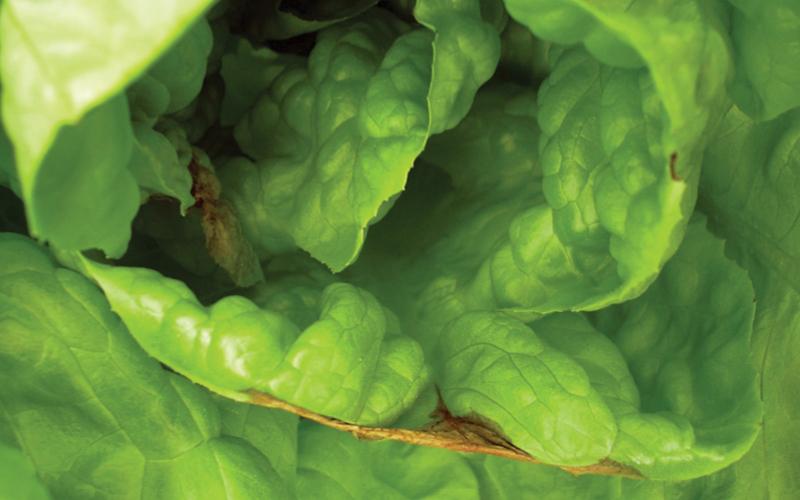 nutrientes en plantas