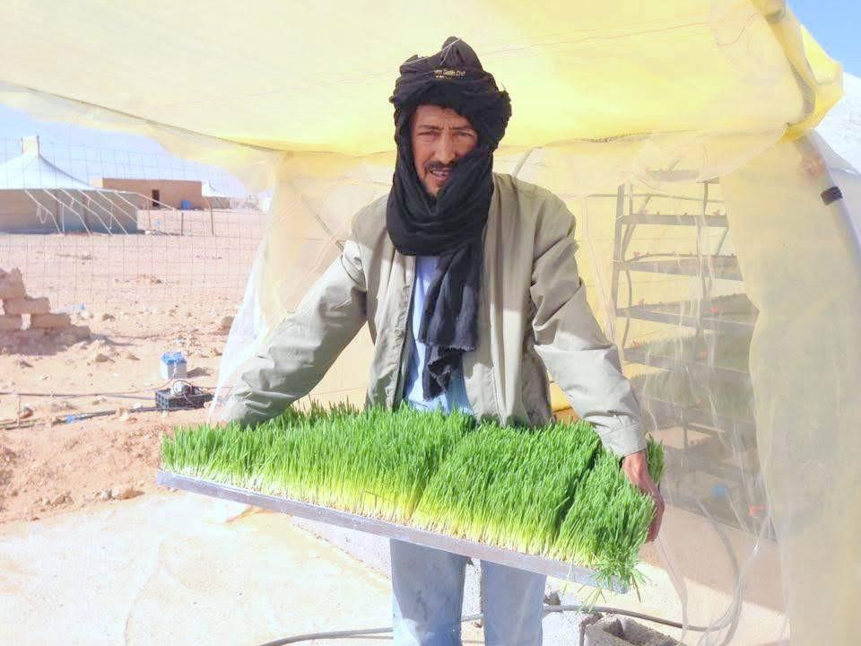 Agricultura del desierto: ahorro de agua con hidroponía