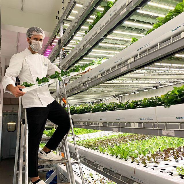 agricultura vertical españa