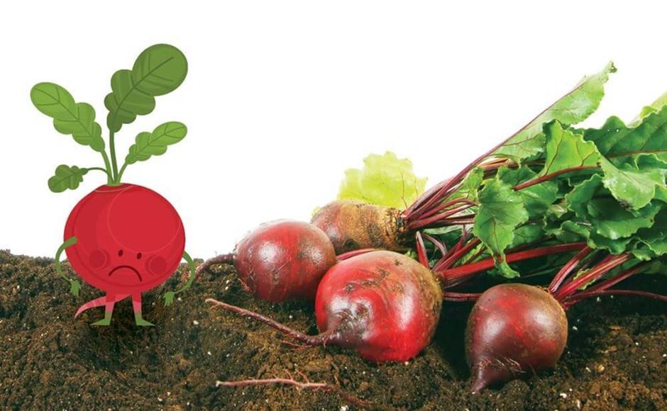 No intente cultivar estas plantas en hidroponía