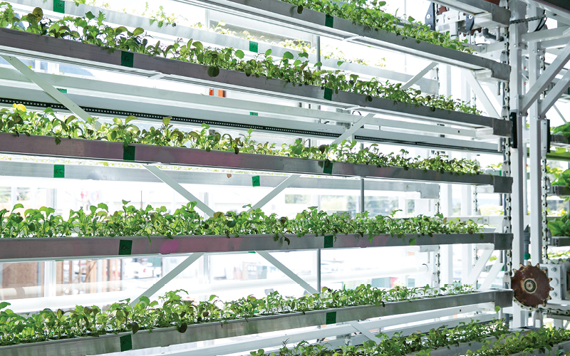 jardines verticais