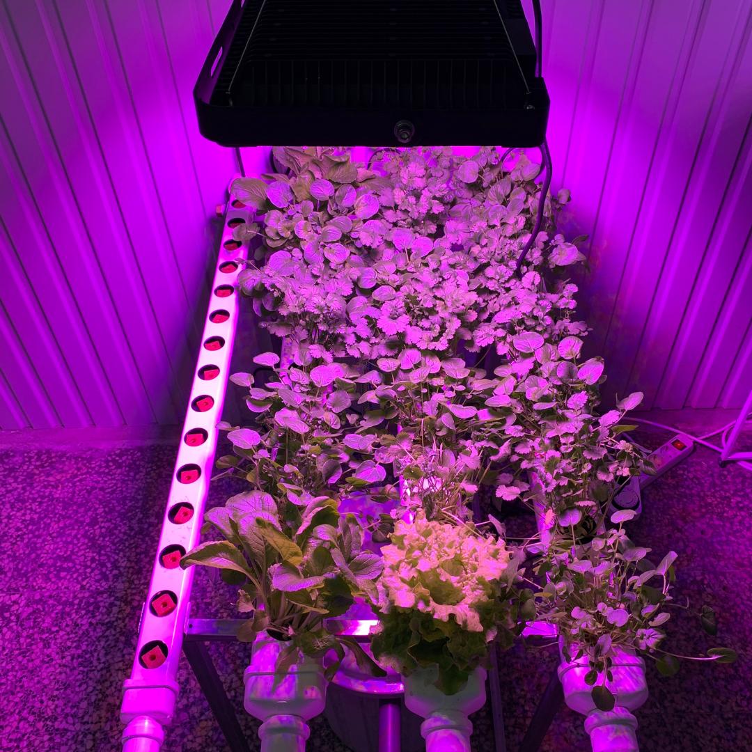 iluminación hidroponía