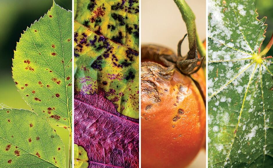 Prevención de enfermedades y plagas