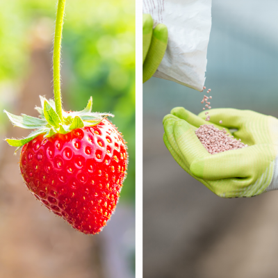 Nutrientes fase fructificación