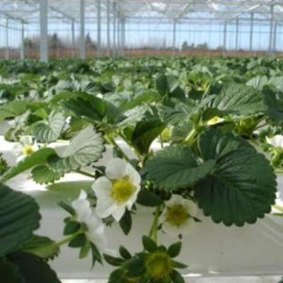 Nutrientes fase vegetativa