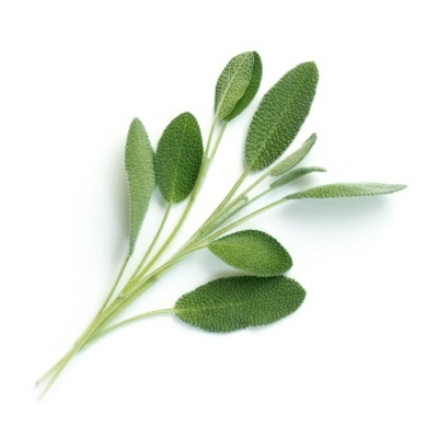 Salvia Orgánica