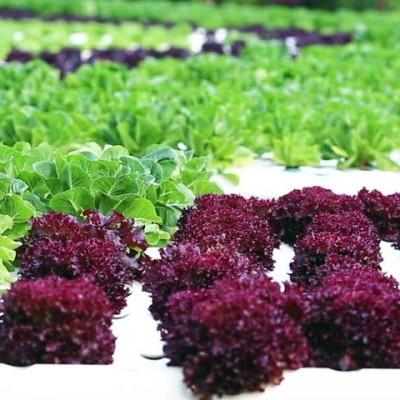 Nutrientes Verduras